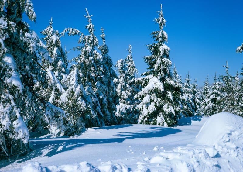 Snöig skog arkivfoto