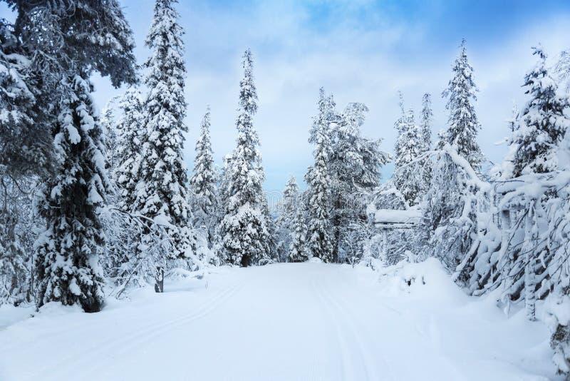 snöig skoglandskap i Finland, Lapland royaltyfria bilder