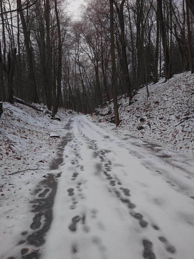 Snöig skogNedtjärad-stad royaltyfri bild