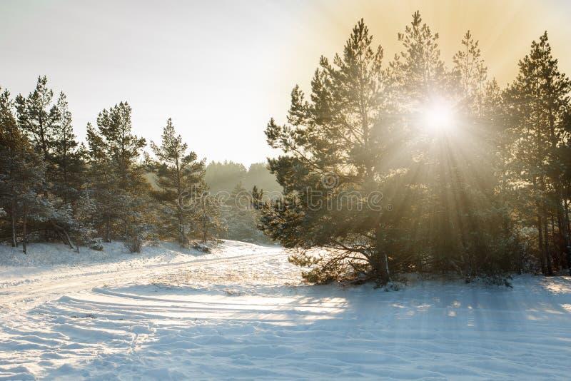 Snöig skogplats arkivbild