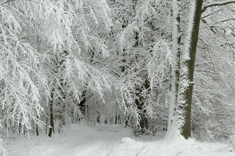 snöig skogväg royaltyfri fotografi