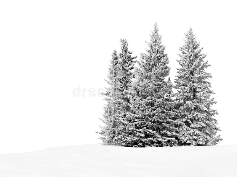 Snöig träd royaltyfria foton