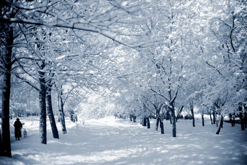 Snöig träd i en stad parkerar på en solig dag fotografering för bildbyråer