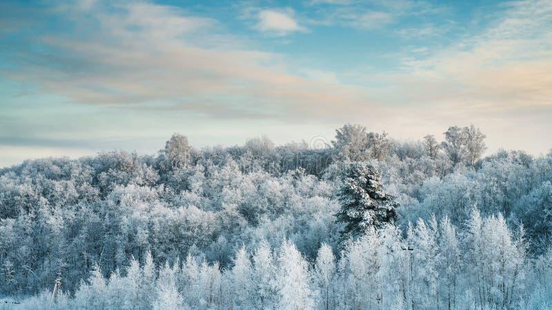 Snöig träd i skog på den soliga dagen royaltyfria foton