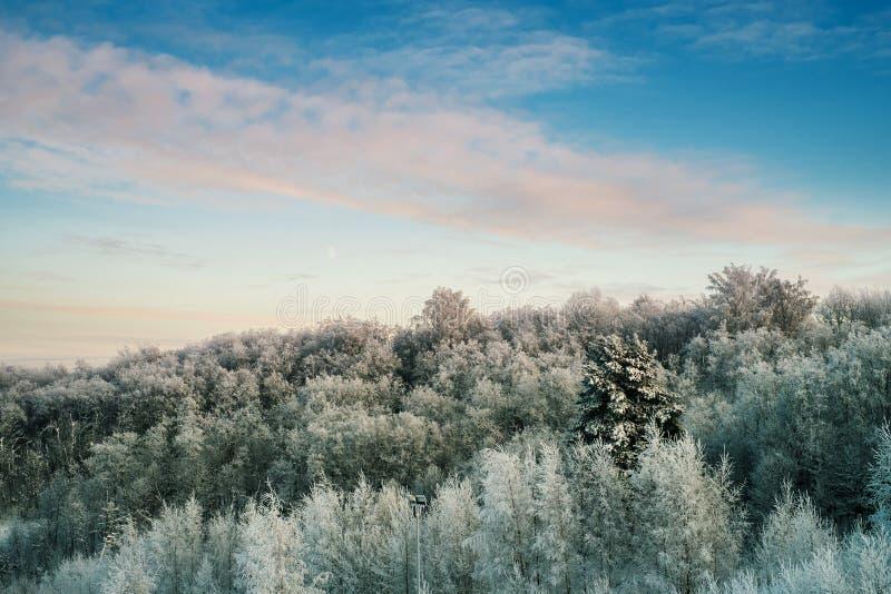 Snöig träd i skog på den soliga dagen arkivfoton