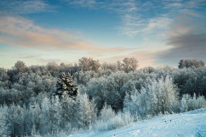 Snöig träd i skog på den soliga dagen fotografering för bildbyråer
