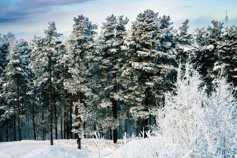 Snöig träd i skog på den soliga dagen arkivfoto