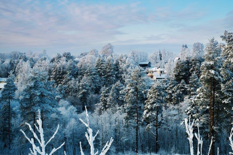 Snöig träd och stugor i skog på den soliga dagen fotografering för bildbyråer