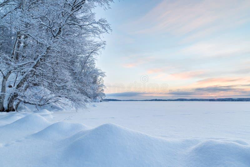 Snöig träd, snödrivor och sjö i Finland arkivbilder