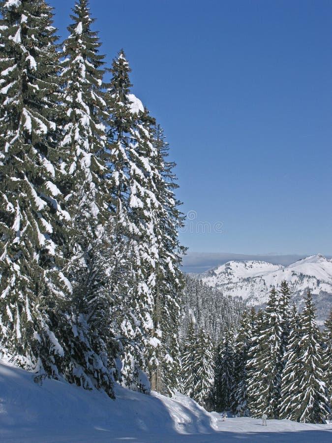 Snöig Trees För Blåa Flaineskies Royaltyfria Bilder