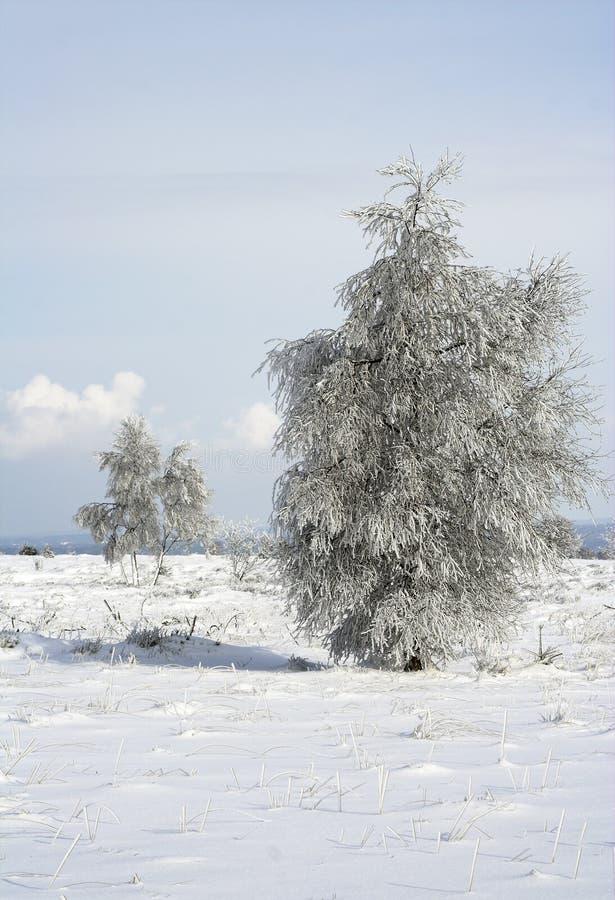 Download Snöig trees för ensam äng fotografering för bildbyråer. Bild av clean - 515065
