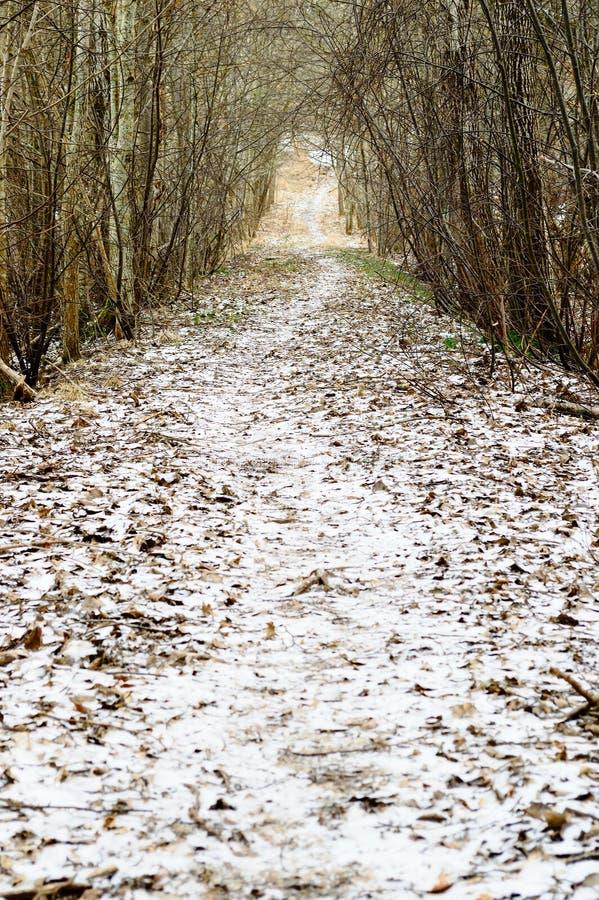Snöig trees i vinter och lantlig väg fotografering för bildbyråer