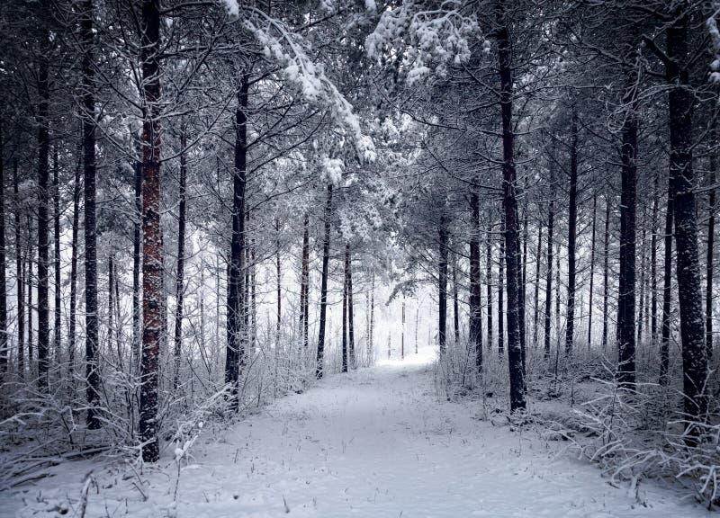 Snöig väg till och med den kalla vintriga skogen fotografering för bildbyråer