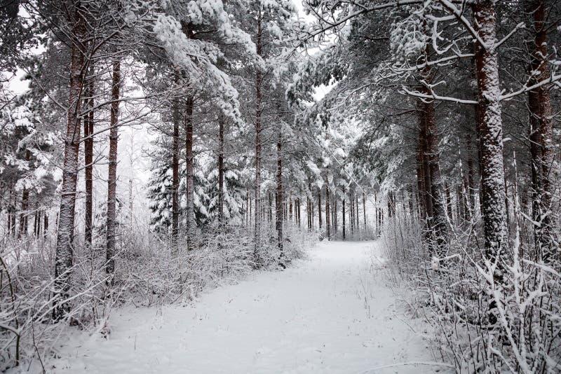 Snöig väg till och med den snöig skogen arkivfoto