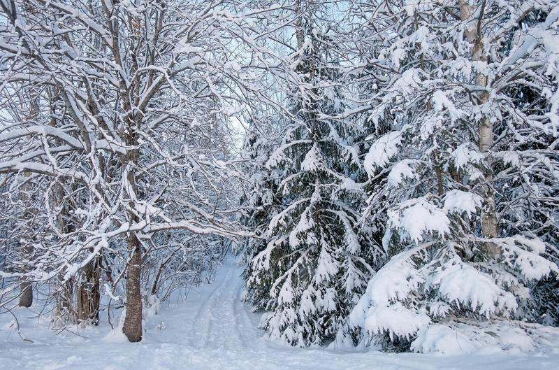Snöig väg till och med den vintriga skogen arkivbild