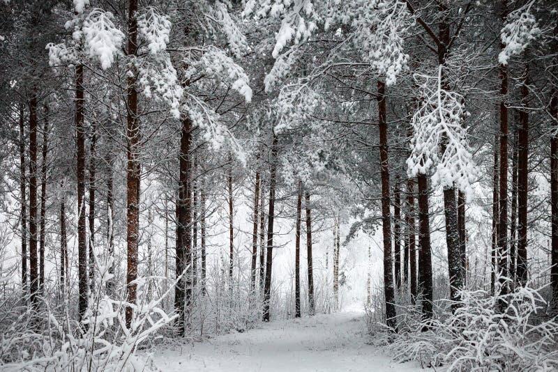 Snöig väg till och med den vintriga skogen royaltyfri fotografi