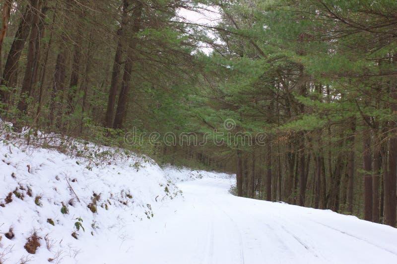 Snöig väg till och med vintergrön skog royaltyfria foton