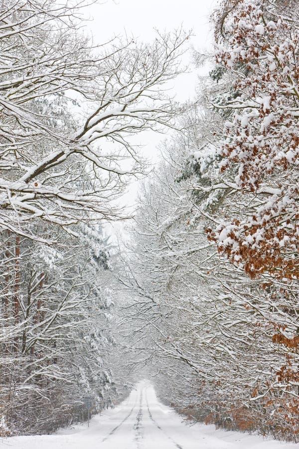 snöig väg, Tjeckien arkivbild