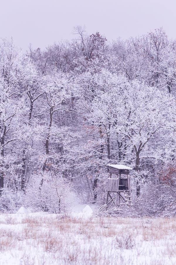 Snöig vinter royaltyfri foto