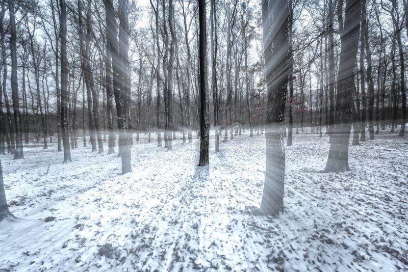 Snöig vinter i ekskogen arkivbild