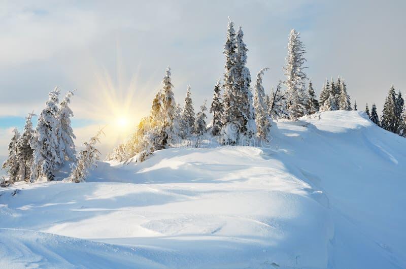 Snöig vinter i en skog royaltyfria bilder