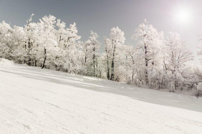 Snöig vinterlutning för skidåkning eller snowboarding, med träd bort längs vägen, med en blå klar himmel och en kall vintersol, v arkivfoto