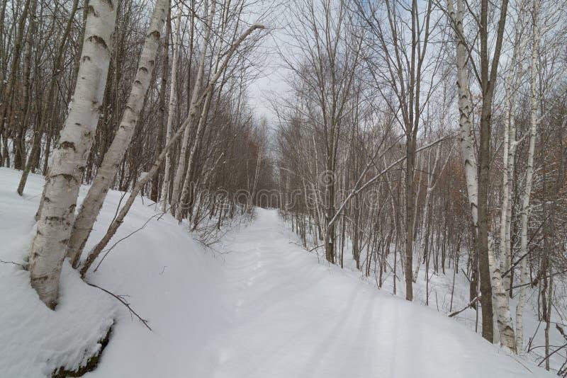 Snöig vintrig bana för naturskogfot till och med björkskogen - skidåkning för argt land och att fotvandra, fet gummihjulcykelrekr fotografering för bildbyråer