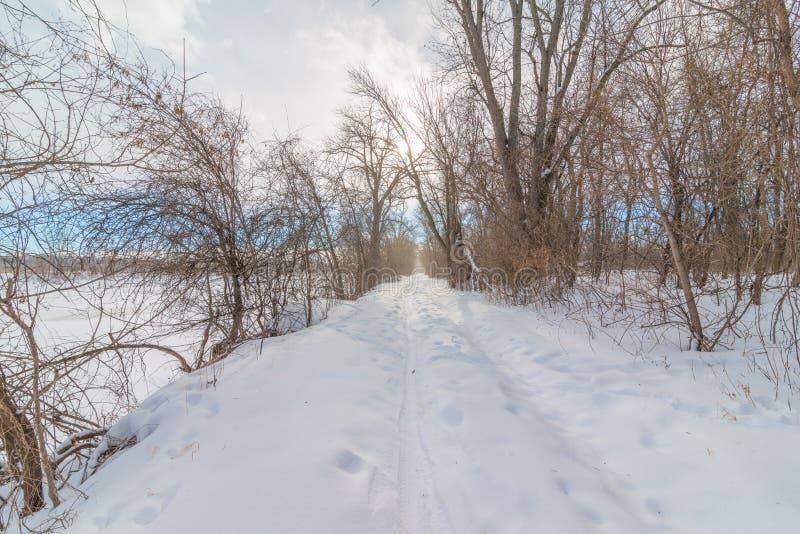 Snöig vintrig bana för naturskogfot till och med skogen - skidåkning för argt land och att fotvandra, fet gummihjulcykelrekreatio arkivfoto