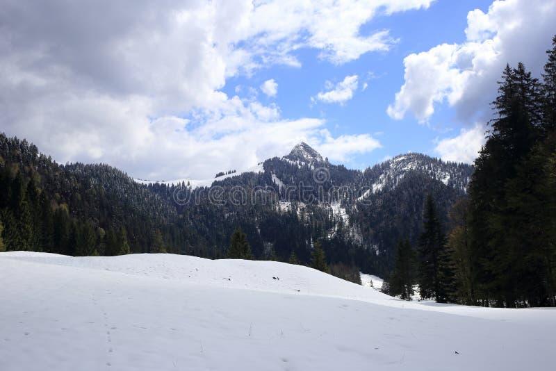 Snölandskap på vintern arkivbilder