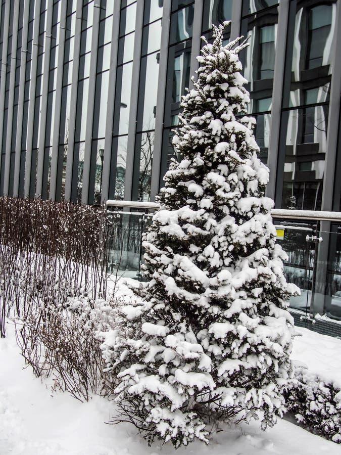Snöräkningen sörjer trädet på utomhus- royaltyfri bild