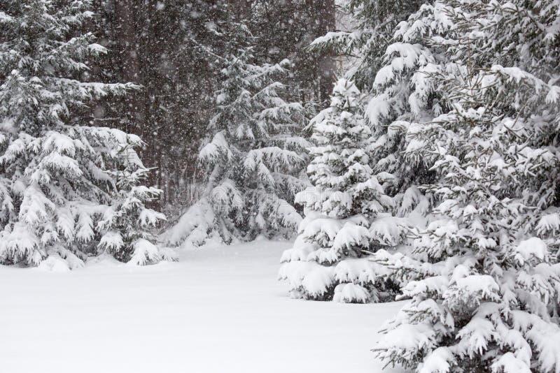 Snöstorm i mars royaltyfria bilder