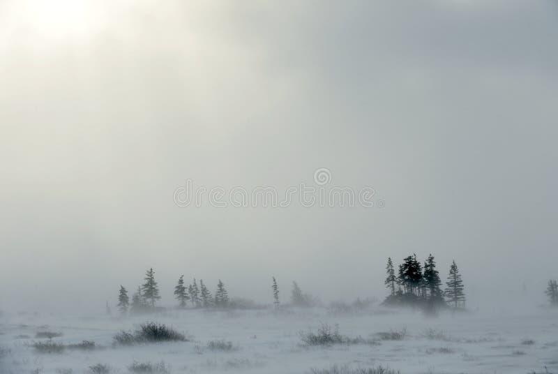 Snöstorm i tundralandskap med träd fotografering för bildbyråer