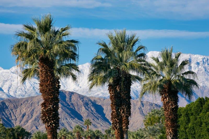 Snötäckta berg Palm tree California royaltyfri fotografi