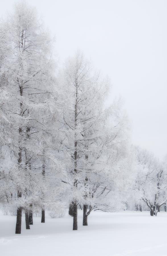 Snöträd royaltyfria bilder