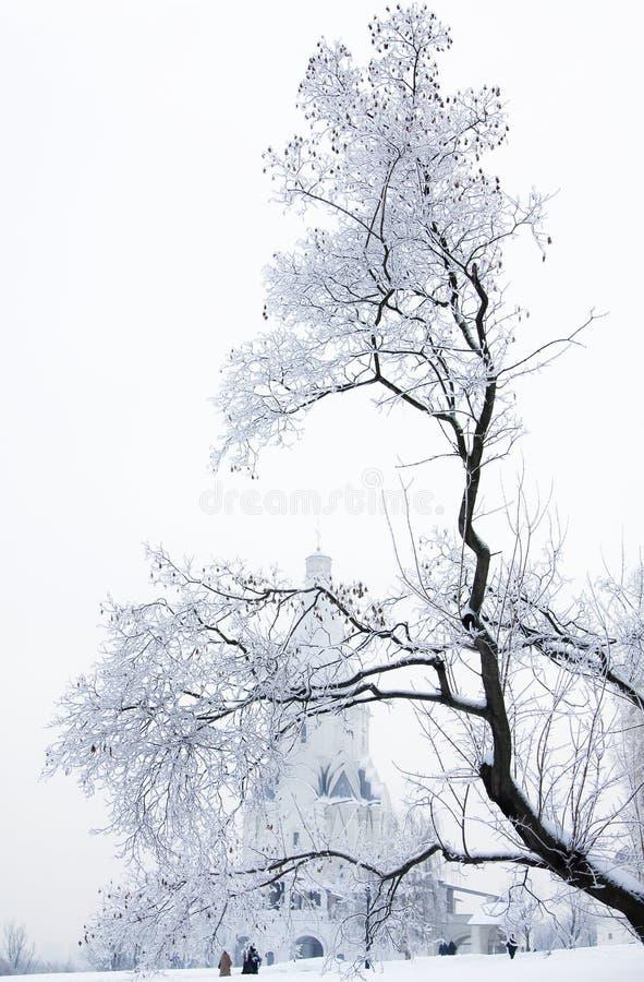 Snöträd royaltyfri bild