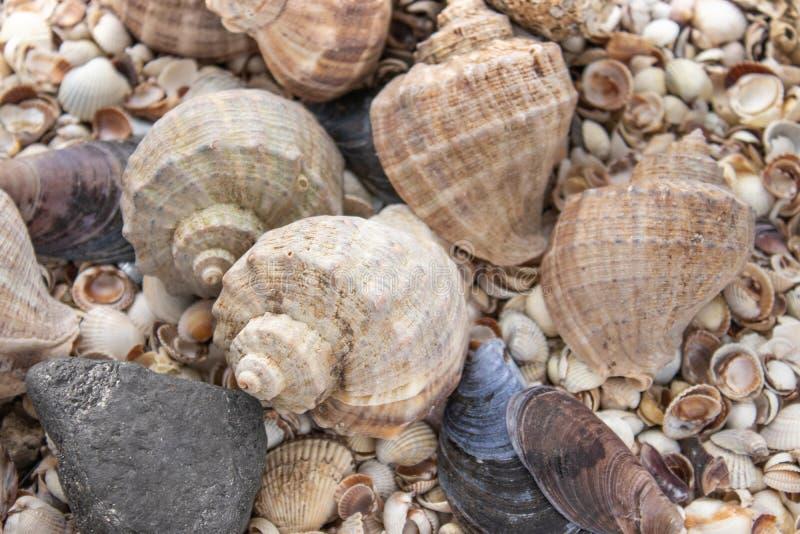 Sn?ckskal, havsskal - texturer eller bakgrunder - olika kiselstenar, stenar och hinder royaltyfri fotografi