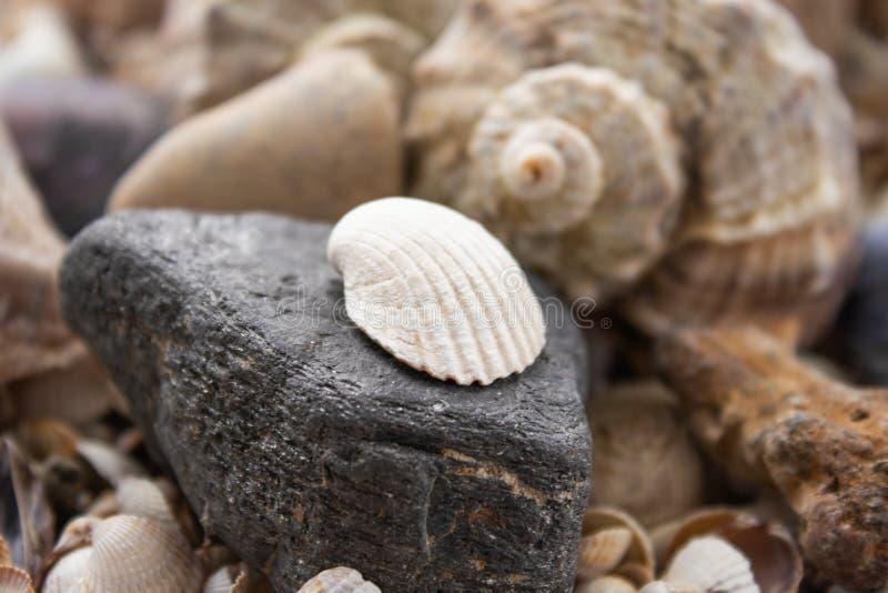 Sn?ckskal, havsskal - texturer eller bakgrunder - olika kiselstenar, stenar och hinder arkivfoto