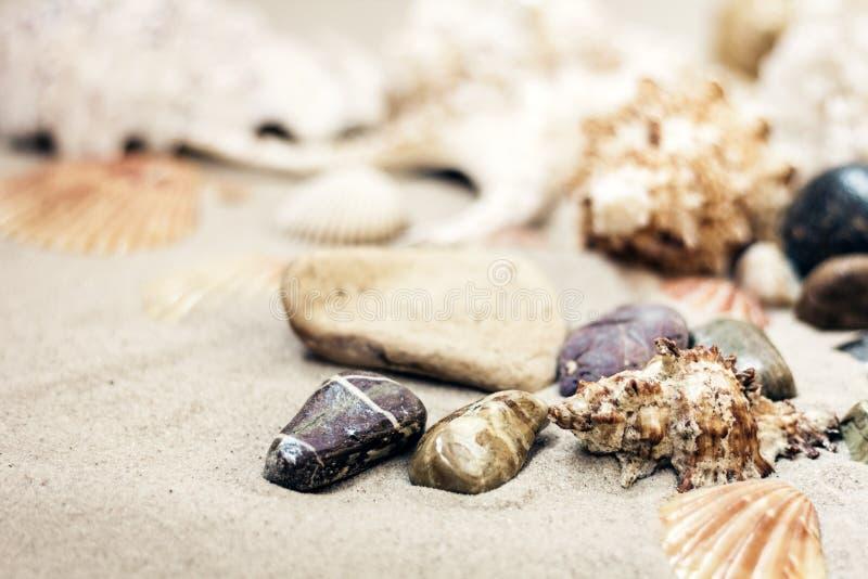 Sn?ckskal och stenar p? sanden, begrepp f?r lopp f?r sommarstrandbakgrund med kopieringsutrymme f?r text royaltyfri foto