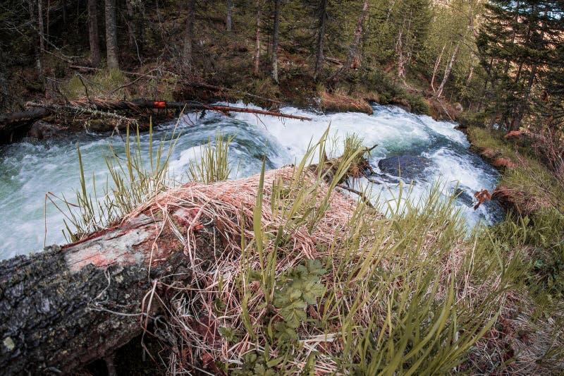 Snabb bergflod i den Taiga skogen royaltyfri fotografi