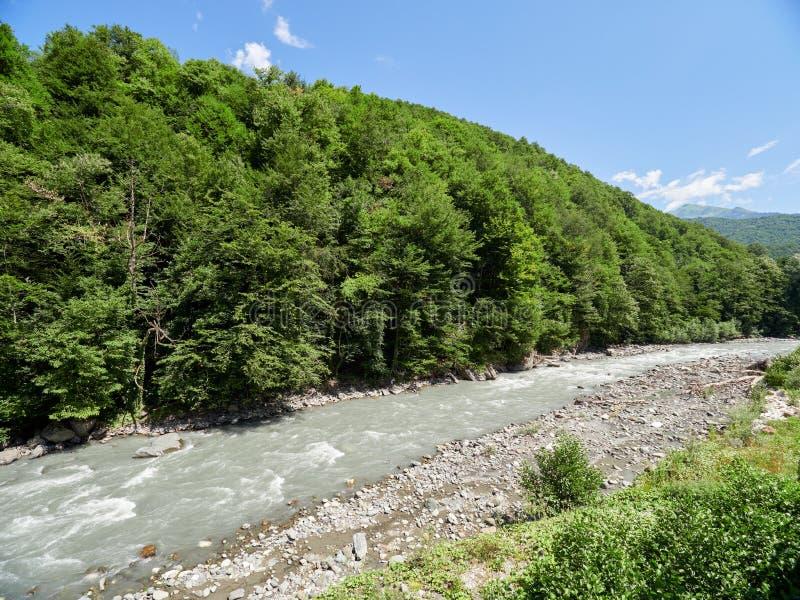 Snabb bergflod med den tjocka gröna skogen på kusten royaltyfri bild