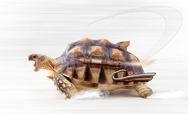 snabb sköldpadda vektor illustrationer