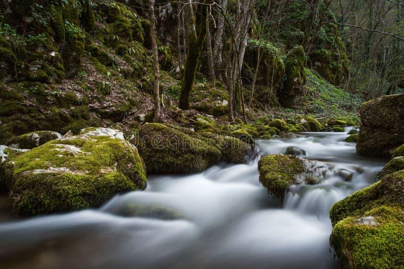 Snabb skogflod som flödar bland stenar Härligt landskap i S arkivbilder