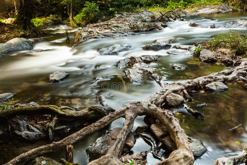 Snabb ström i vintergrön skog royaltyfria foton