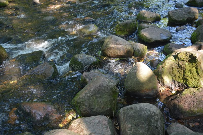 Snabbt vatten stenar Autumn Park Sunny Nature royaltyfri fotografi