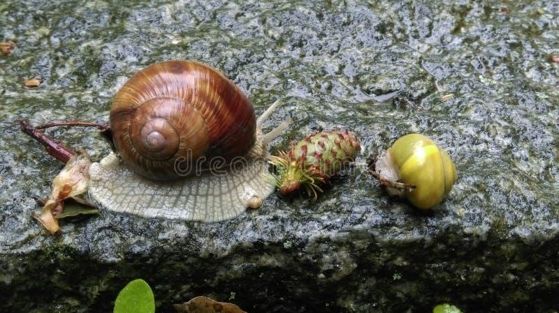 Snail& x27 φιλία του s στοκ φωτογραφίες