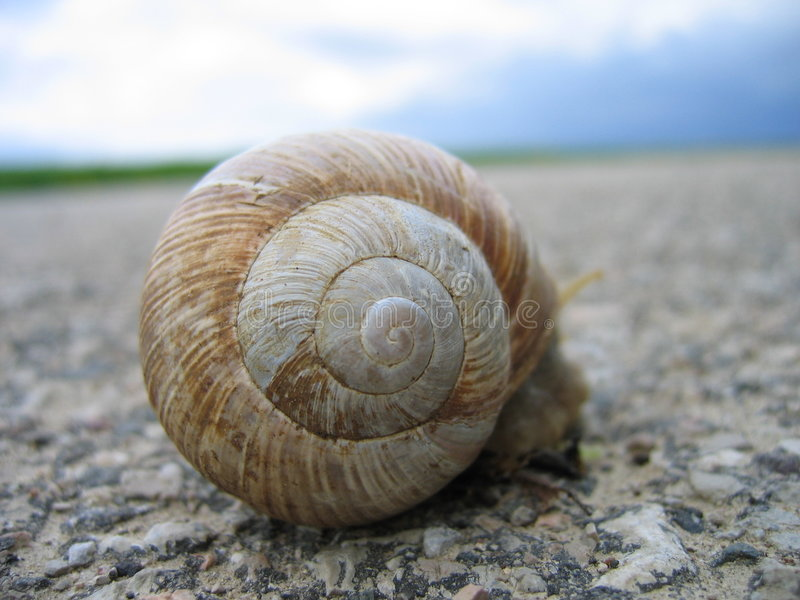 Download Snail stock image. Image of delicate, drive, move, street - 4951