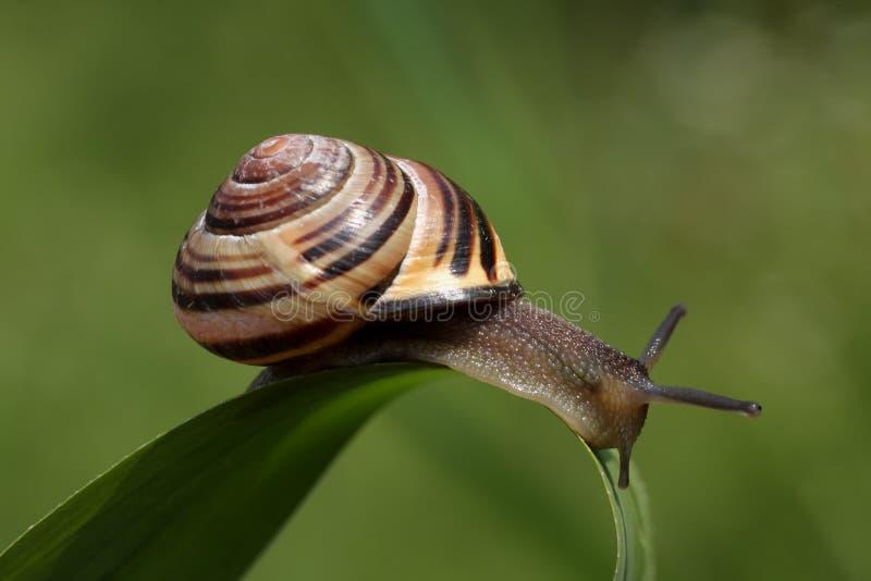 snail arkivbilder
