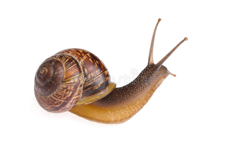 Download Snail stock image. Image of shell, cute, crawl, cutout - 14907271