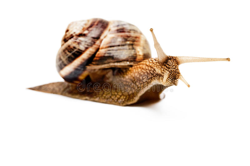 Download Snail stock photo. Image of mucus, sliding, molluscs - 14924062