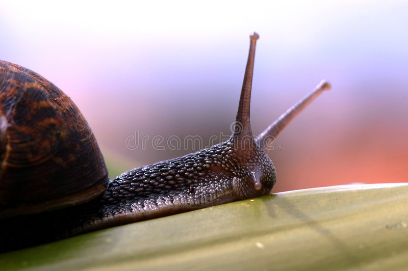 Download Snail stock image. Image of animal, natural, various, details - 151623